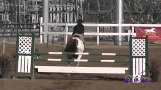 036S Kishorie Weingart Preliminary Rider Show Jumping Fresno County Horse Park Oct 2014