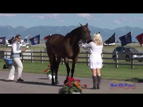 098J1 Hawley Bennett Awad On Jollybo CCI3* FEI Jog 1 Rebecca Farm July 2016