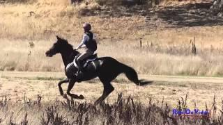 011 Andrea Baxter on Indy 500 CIC3* Cross Country Woodside Int'l Event Oct 2014
