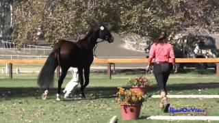 410 Andrea Baxter with Moto GP FEH 3yr Old Galway Downs Int'l Event Nov 2014
