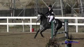 121S Bethany Wallace on Cerne Abbas Open Novice Show Jumping FCHP November 2014
