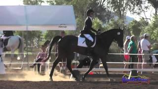 301D Priscilla Salehi on Just a Mystery Intro Dressage Copper Meadows March 2015