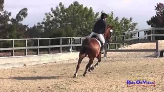 091S Katarina Short on Jack of All Trades SR Training Show Jumping Woodside August 2014