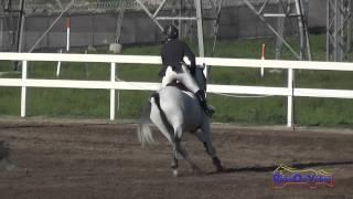 033S Gina Miles on Contalli Di Revel CIC1* Show Jumping FCHP February 2015