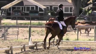 249D Becky Leisz On Calvin Clyde Open Beginner Novice Dressage Shepherd Ranch June 2015