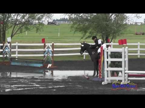 001S Rachelle Behnka On Dragoon Knight's Saber Intro Show Jumping Spokane Sport Horse HT May 2016