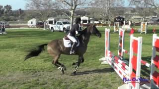 165S Gloria Roman on Good Time Charlie SR Beginner Novice Show Jumping Galway Downs Feb. 2017