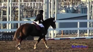 207S Melissa Groom on Rosie Future Intro Show Jumping FCHP November 2014