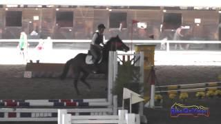 081J Toni Harmon on Goo Goo Doll Intro Jumping Pacific Indoor Eventing October 2014