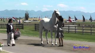 237J1 Sade Cain On Zeloso Interagro Training 3-Day FEI Jog 1 The Event At Rebecca Farm July 2015