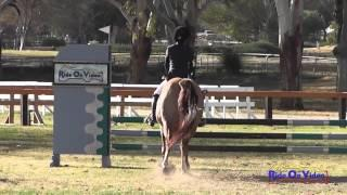 204S Chloe Feagler on Chasing Perfection JR Beginner Novice Show Jumping Galway Downs Jan 2014