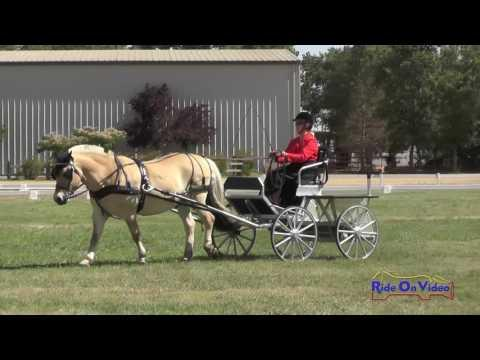 015D Mary Poe Preliminary Single Pony Clay Station CDE Dressage June 2016