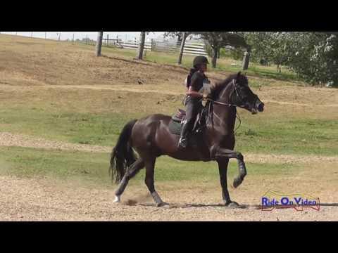 170XC Colleen Barnick On Osu Handsome JR Intro Cross Country Shepherd Ranch June 2016