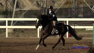 196S Connie Arthur on Meaghan Leesha Moore Intro Show Jumping FCHP November 2014