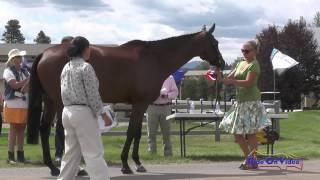 231J2 Kris Wood On Freetoagoodhome Training 3-Day FEI Jog 2 The Event At Rebecca Farm July 2015