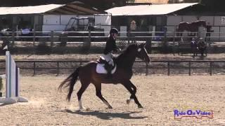 113S Ruth Bley on EnVogue SR Training Amateur Show Jumping Woodside August 2014