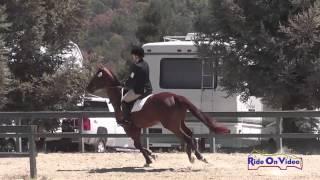 061S Tylia Schoenewald on Aramé Preliminary Rider Show Jumping Woodside August 2014