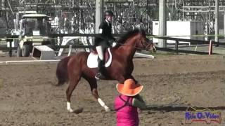 156S Livia Richards JR Intro Rider Stadium Jumping Fresno County Horse Park Feb 2013