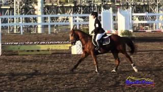 211S Jena Tassone on Let's Roll Intro Show Jumping FCHP November 2014