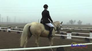 008D Kaila Flores on Star's Southern Charm Intro Dressage FCHP January 2015