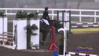 144S Lauren Lockwood on Romeo JR Beginner Novice Show Jumping FCHP November 2014