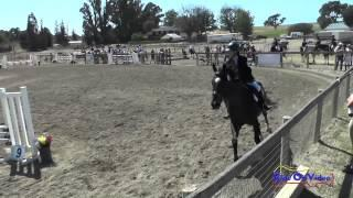 265S Madison DeSchryver On The Usual Suspect I Intro Show Jumping Shepherd Ranch June 2015