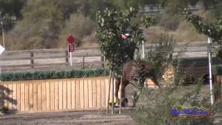 008XC Whitney Tucker on Chavez Ravine CCI1* Cross Country Galway Downs Int'l Event Nov 2014