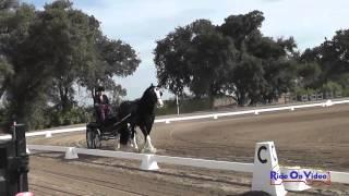 25D Denise Nelson Training Single Horse Dressage Sargent Equestrian CDE August 2014