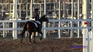 212S Jazmin Holguin on Winter's Fable Intro Show Jumping FCHP November 2014