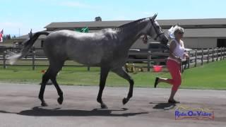 210J1 Heather Morris On Get Rowdy Training 3-Day FEI Jog 1 The Event At Rebecca Farm July 2015