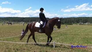 180D Elizabeth Linde on Pie and Ice Cream Open Training Dressage Whidbey Island July 2018