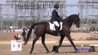 097D Bay Warland on Ducky Lucky YR Novice Dressage Fresno County Horse Park Oct 2014
