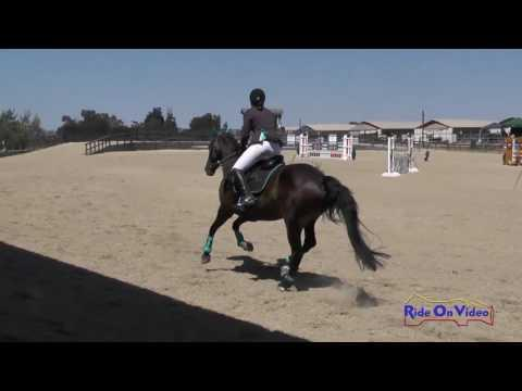 046S Kathryn Canario On Ringwood Little Imp Open Preliminary Show Jumping Woodside August 2016