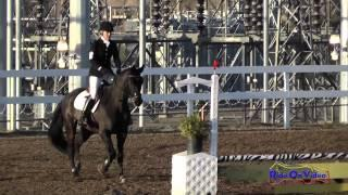 203S Heather Marchman on Duke HW Intro Show Jumping FCHP November 2014