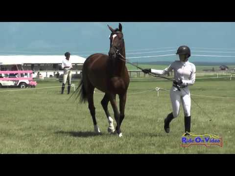 590C Kelsey Horn On Tomlong Ratatouille YEH 5yr Old Conformation The Event At Rebecca Farm July 2015