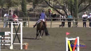 024S Ashlyn Dorsey on RF Kinetic CCI1* Show Jumping Galway Downs November 2014