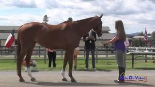 224J2 Lauren Oliver On Regal's Moment Training 3-Day FEI Jog 2 The Event At Rebecca Farm July 2015