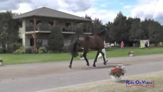 225J2 Sophie Stephens Training 3-Day FEI Jog 2 The Event At Rebecca Farm July 2015